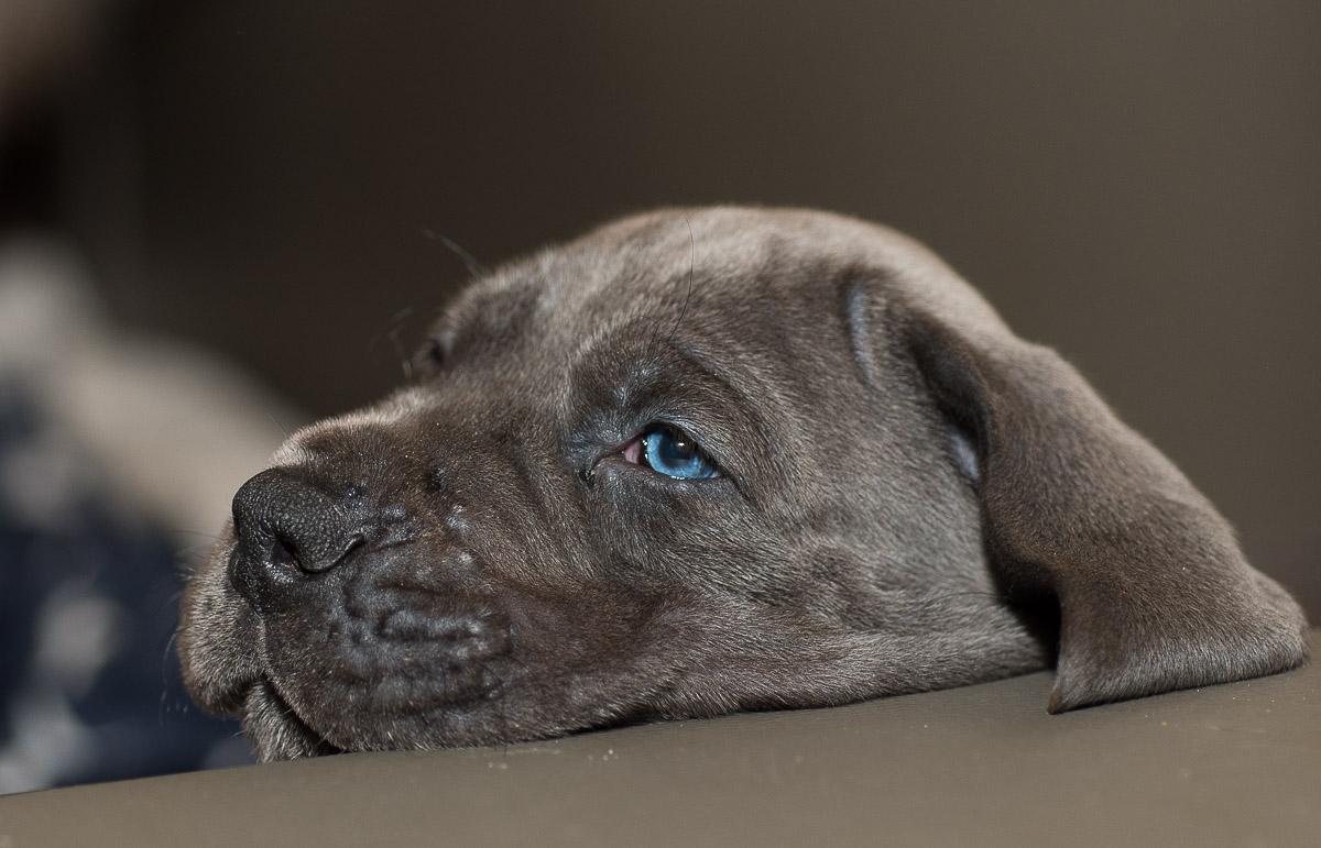 DOGGEN.dog